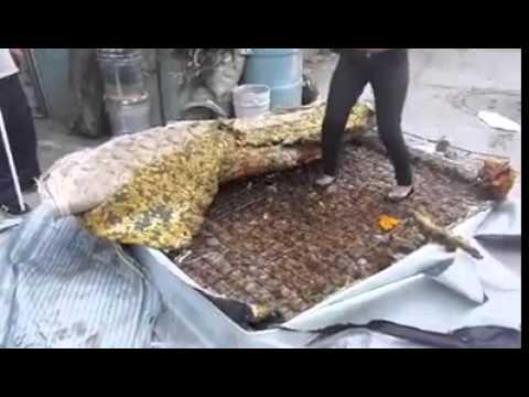 Colchones reciclados un fraude youtube - Home colchones ...