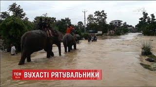 У Непалі тварини допомагають вивозити заблокованих туристів із затопленого сафарі парку