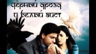 Shahrukh & Sushmita | Чёрный дрозд и Белый аист
