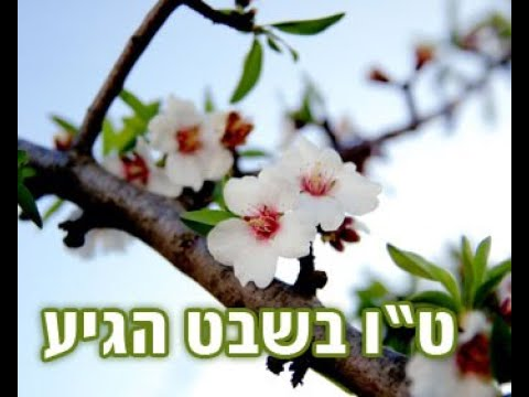 הרב יונתן בן משה - מה המסר מטו' בשבט ? רעיון ענק - חייבים לראות !!!