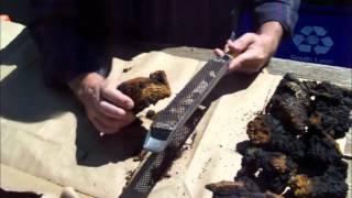 How To Clean And Prepare Chaga For Tea -  Inonotus obliquus