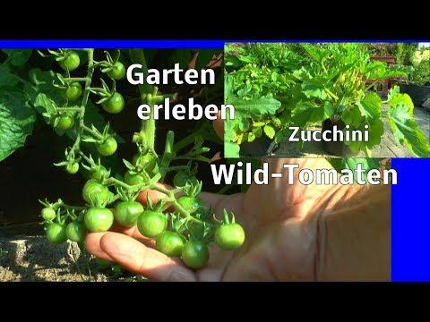 Garten mitte Juli kleine Eindrücke der Pflanzen im Wachstum Pflanzen erleben