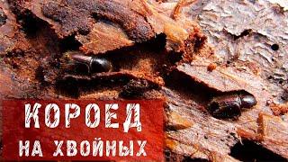 ФАЗЕНДА - 2013.12.01 - Фрагмент 53