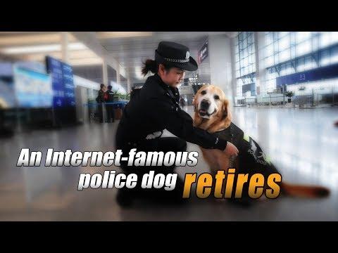 Live: An Internet-famous police dog retires 围观网红警犬即将到来的退休生活