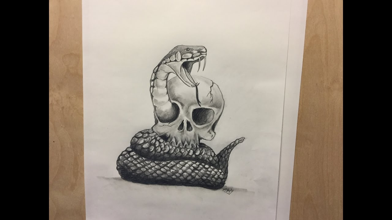 How To Draw A Snake And Skull Tattoo Realistic Animals