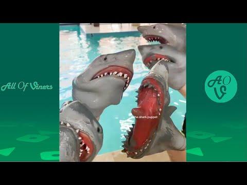 New Shark Puppet Compilation   Funny Shark Puppet Videos 2020