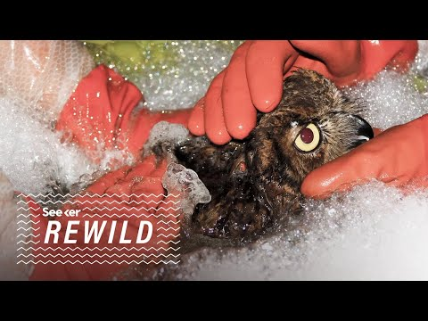 This Is Why Birds Are So Affected by Oil Spills
