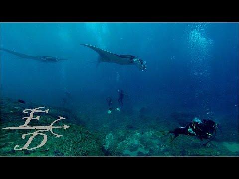 FROGdive OPs TOYOPAKEH 1609 - MANTA RAYS @ NUSA PENIDA ISLAND