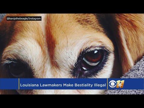 Bill Passes Making Bestiality Illegal In Louisiana
