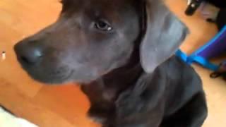 My funny puppy 2!!!! Thumbnail