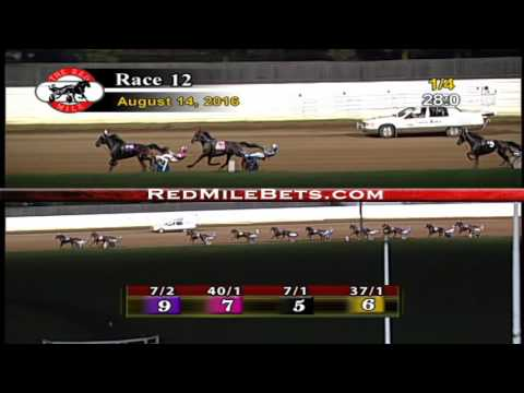 Red Mile Racetrack Race 12 8-14-2016