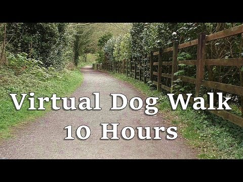 TV for Dogs : Virtual Dog Walk in The Woods - Almost 10 HOURS ✅
