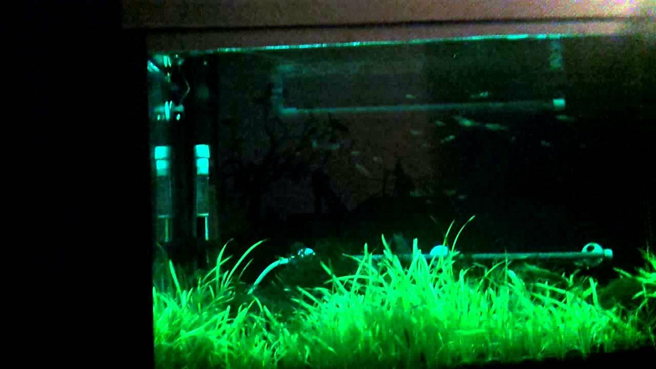 Для аквариума сделано своими руками фото 796
