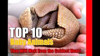 Top 10 Baby Animals That Will Melt Even the Coldest Heart
