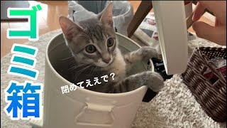 【保護子猫】ゴミ箱の中からコニャニャチワ