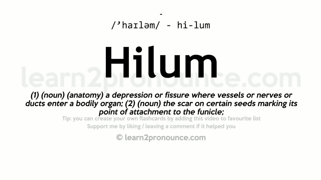 Hilum pronunciation and definition - YouTube