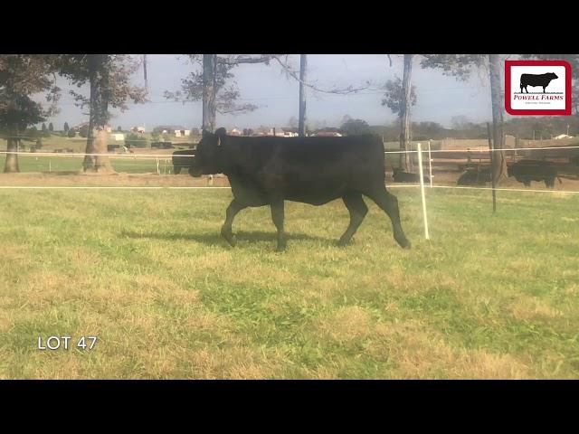 Powell Farms Lot 47
