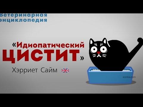 Идиопатический цистит. Feline Idiopathic Cystitis
