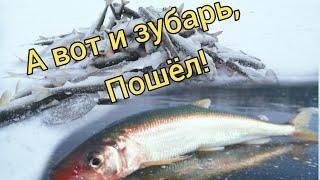 Ловля КОРЮШКИ ЗУБАТКИ в Охотском море 2021 Сахалинская рыбалка Sakhalin fishing