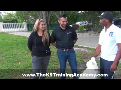 The K9 Training Academy Review