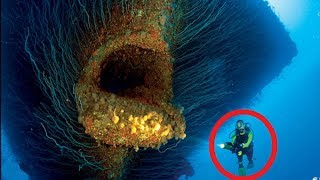 【衝撃】実際に存在した海の怪物たち 4選