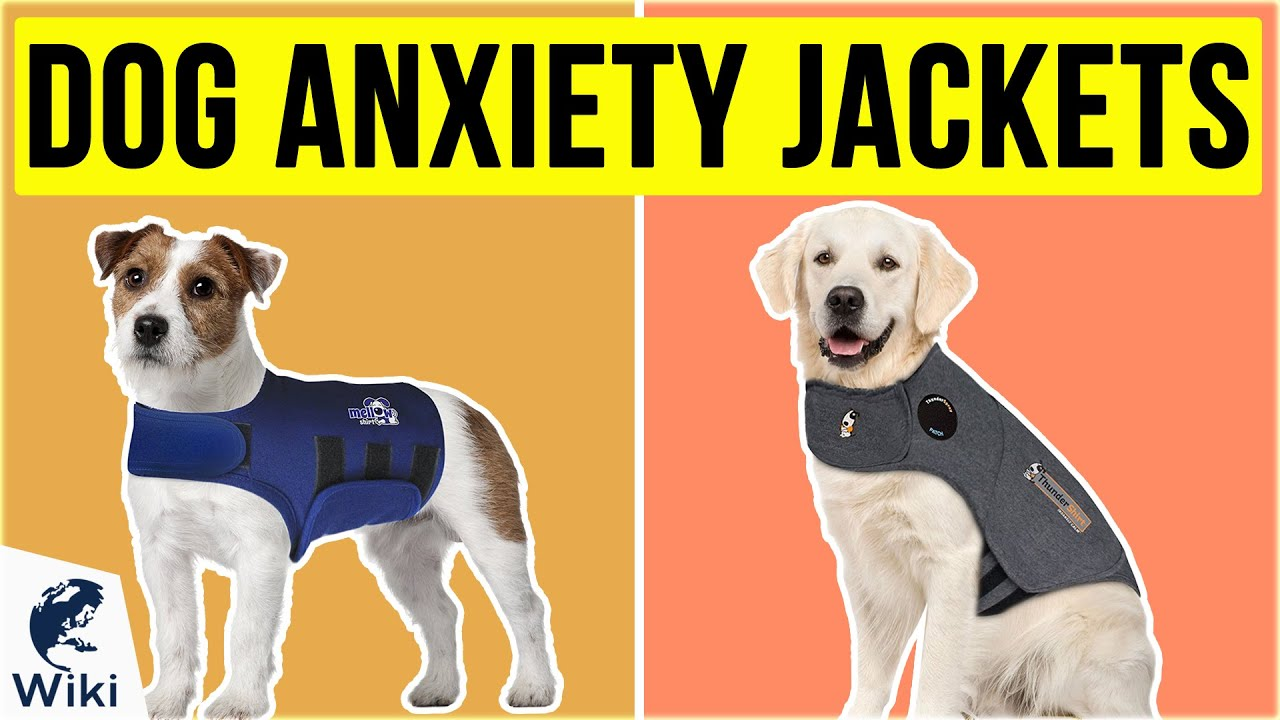 6 Best Dog Anxiety Jackets 2020