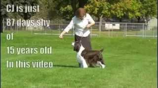 CJ, The Old Show Dog