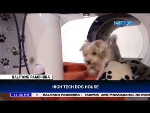 world's most expensive doghouse - youtube