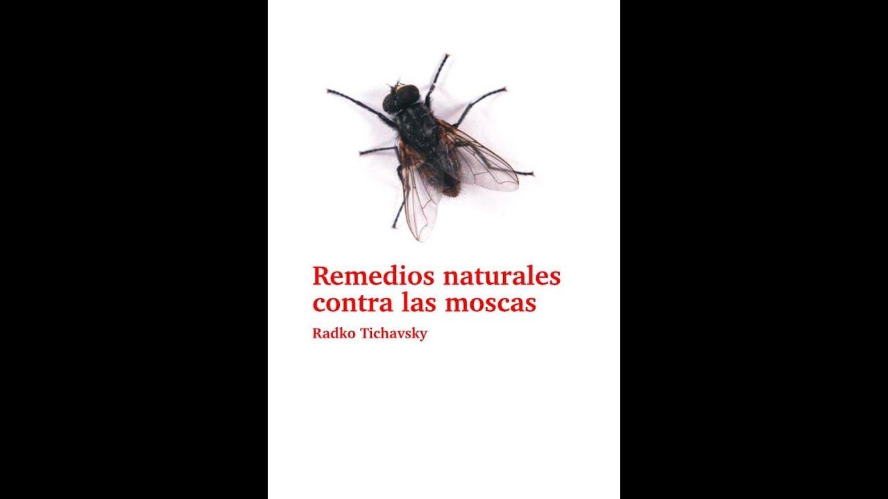 Remedios naturales contra las moscas youtube - Remedio contra las moscas ...