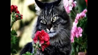 Опасные комнатные растения для кошек Первая помощь при отравлении
