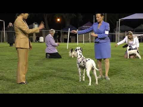 13 July 2019 Beenleigh Kennel Club Championship Show