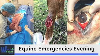 Equine Emergencies Evening - Colic, Wounds and Eyes