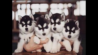 В каком возрасте лучше брать щенка (1 месяц, 2,3,5?!)