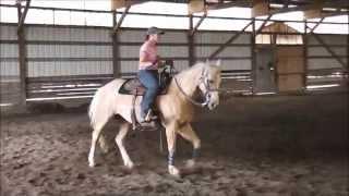 *SOLD* Brianalight~ 2006 AQHA mare