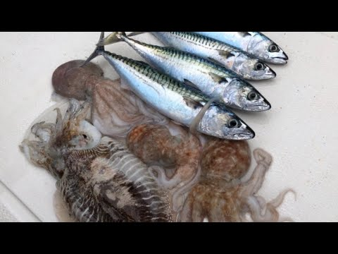 Sea Fishing - Mackerel, Octopus And Squid Fishing - Fish For Bait