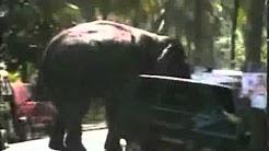 Your car still needs elephant insurance