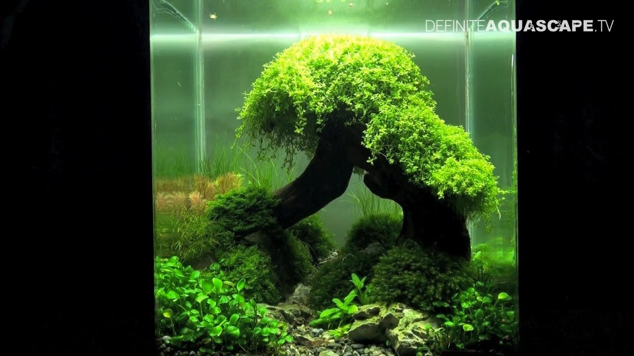 Aquascaping The Art Of The Planted Aquarium 2012 Nano Compilation Youtube