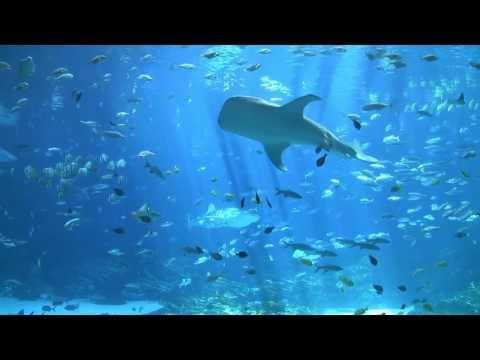 largest aquarium tank in the world - world's largest aquarium