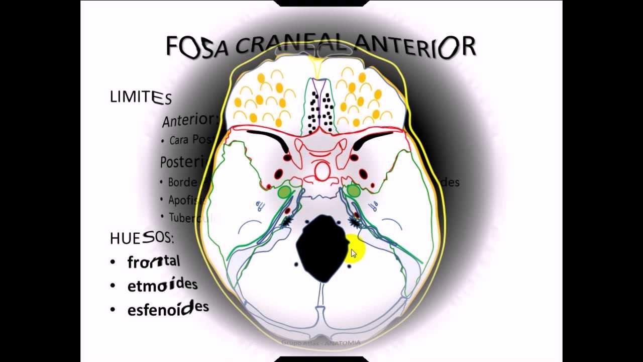 Fosas craneales anatomia cabeza youtube for 12 paredes craneales