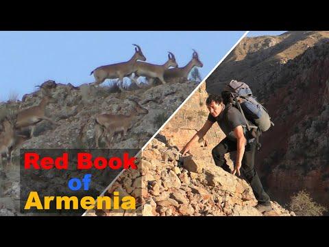 Дикая природа Армении. По ущельям Нораванка (4К)