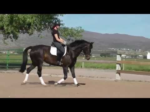 Easy A ( Quite Easy /Chirac/ Stanford) 4-year-old mare for sale