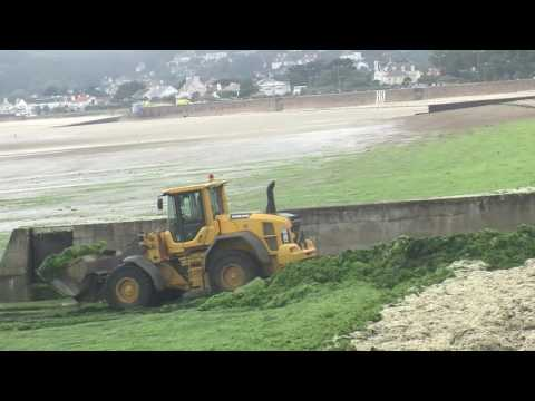 Seaweed clearing