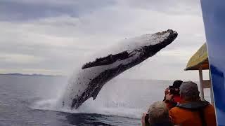 Прыжок кита перед прогулочным судном