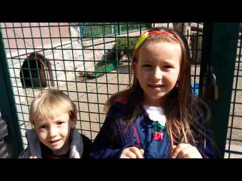 Evcil Hayvan Parkı Pelikan, Tavus Kuşu, Kuğular, Çocukların Eğlenceli Videoları
