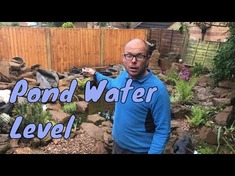 Why Is My Pond Water Level Dropping
