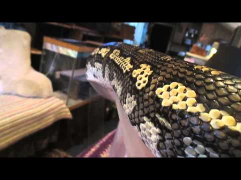 All Reptile Keepers Support USARK !!!! Read Video Info