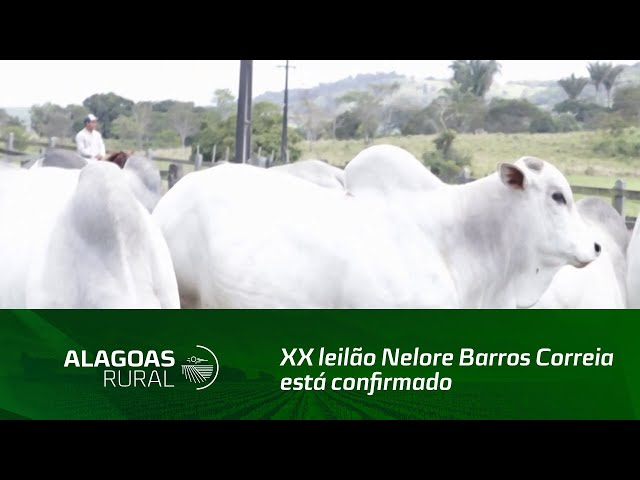 XX leilão Nelore Barros Correia está confirmado