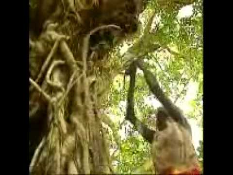 The Most Beautiful Song Ever Written (Australian Aboriginal)
