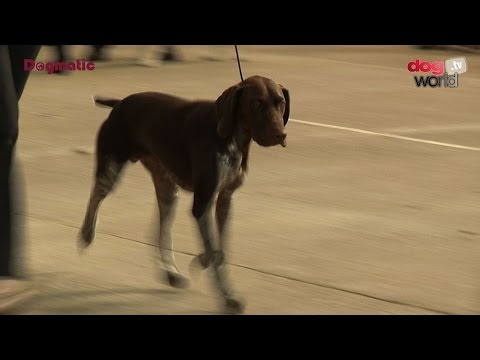 National Gundog 2016 - Best Puppy in Show