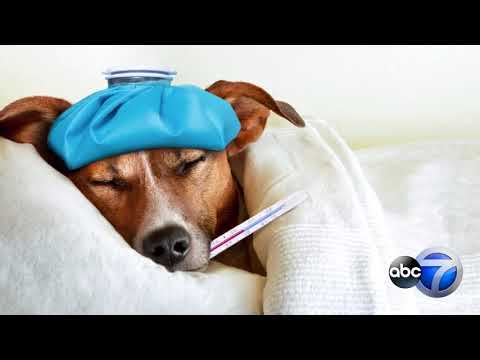 How to protect your pets from dog flu
